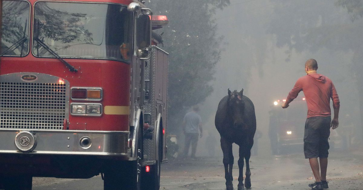 Rescuers rally on social media to save horses from